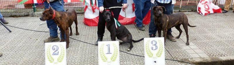 Turtzioz rastrea la genealogía de los perros villanos